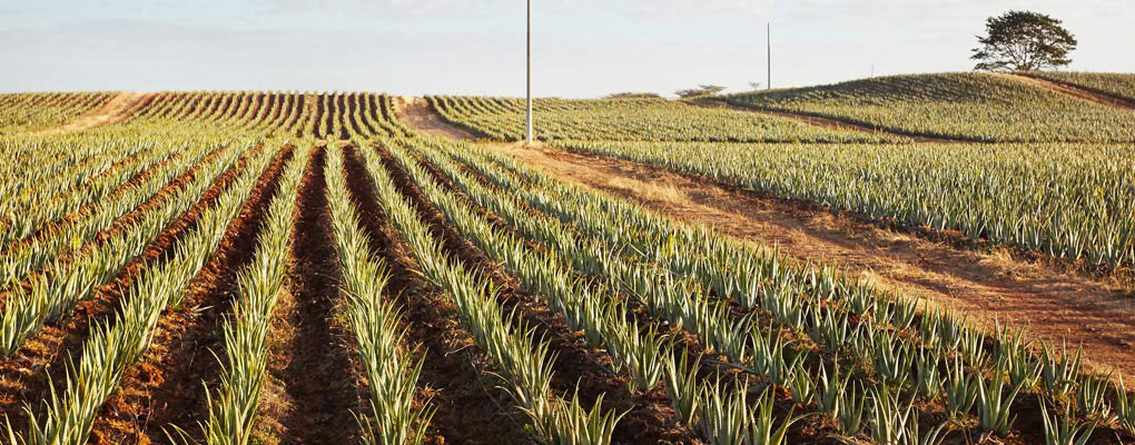 Forever Living named top player in aloe vera market
