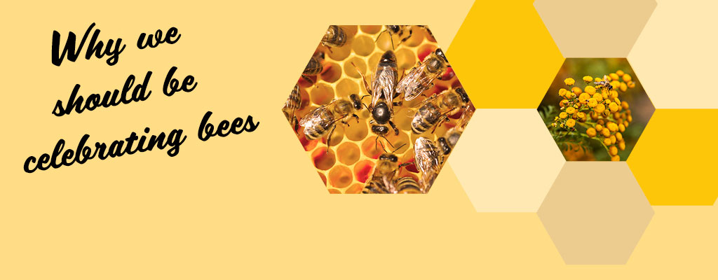 Why we should be celebrating bees