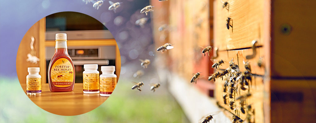 Bee prepared for autumn with nutrition from the hive
