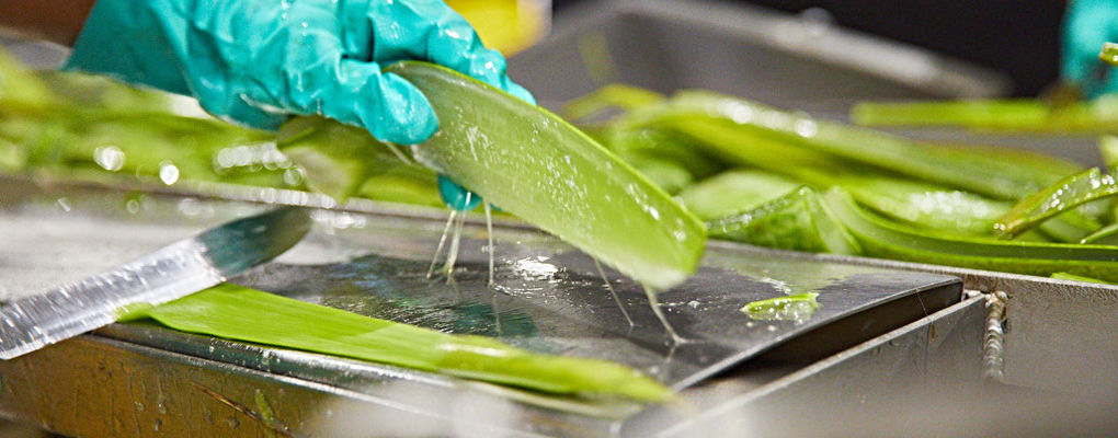 Banner image for the article An in-depth look at Aloe Vera Gel ingredients