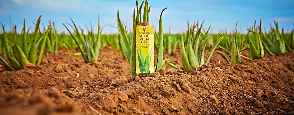 Banner image for the article Ten reasons to love Forever's aloe vera