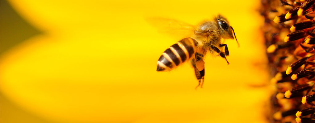 Banner image for the article Why bees are so important to the environment