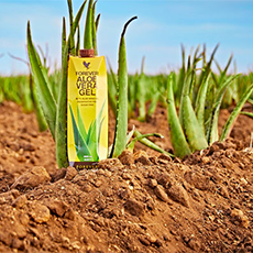 Forever Living is passionate about its products, and in particular its flagship product Forever Aloe Vera Gel.